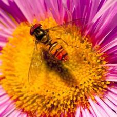 Wasp yola.jpg.opt387x387o0,0s387x387