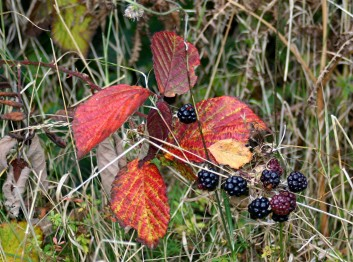 Exmoor Hedgerow